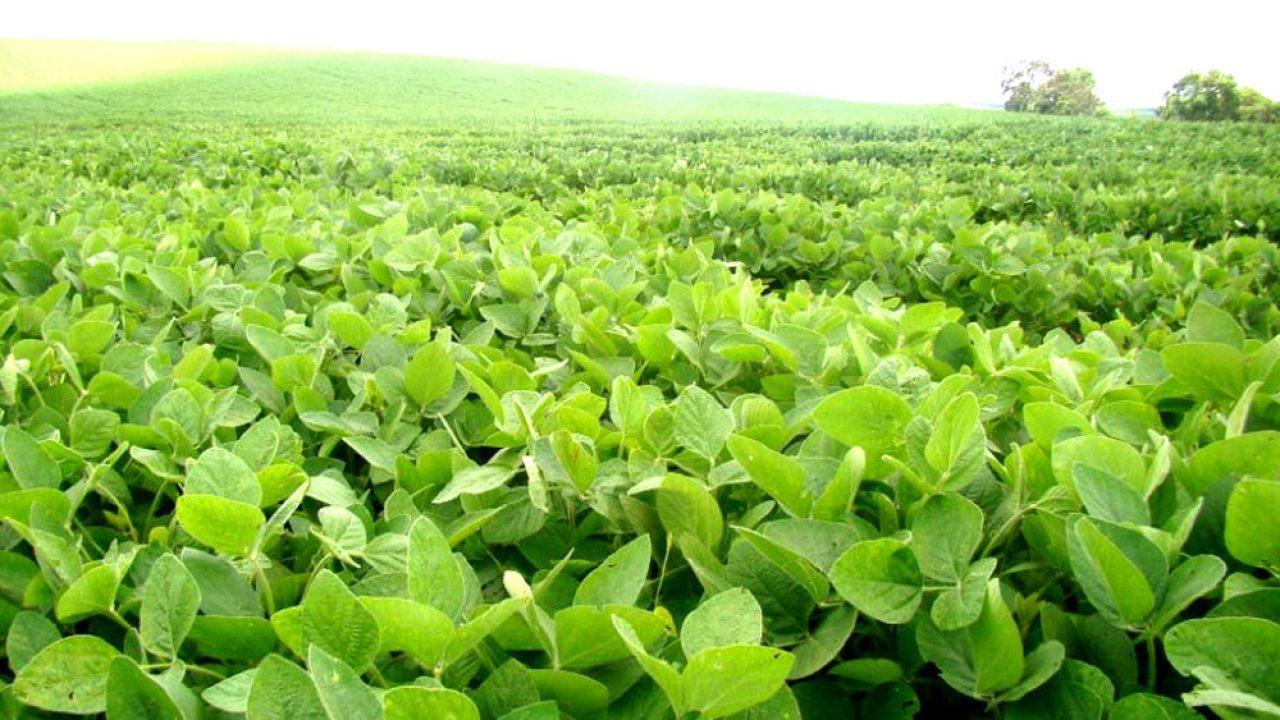 Retenciones a la exportación: soja