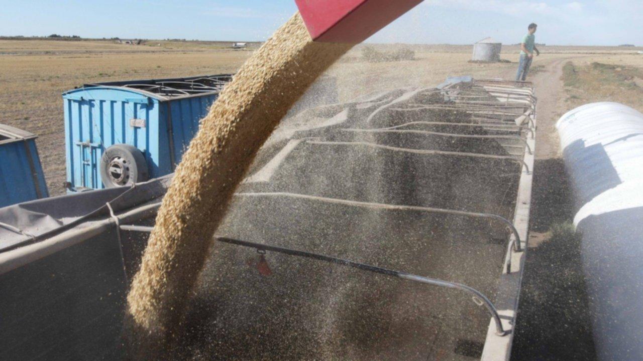 exportación agropecuaria